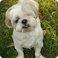 Adopt A Pet :: MacGuyver - N. Babylon, NY