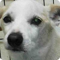Adopt A Pet :: ARLO - Ukiah, CA