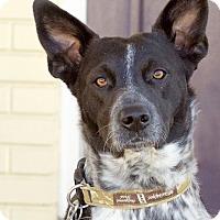 Adopt A Pet :: Kora Belle - Marietta, GA