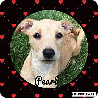 Dachshund/Chihuahua Mix Dog for adoption in Livermore, California - Pearl