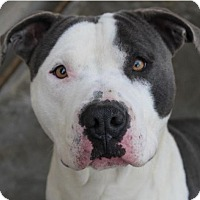 Adopt A Pet :: JINGLE:Low fee: Altered - Red Bluff, CA