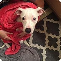 Adopt A Pet :: Hattie - Melrose, FL