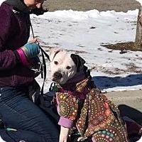 Adopt A Pet :: Mandy - Cranston, RI