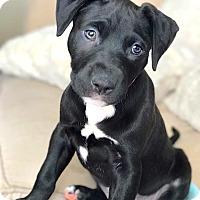 Adopt A Pet :: Pink - Reisterstown, MD