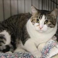 Adopt A Pet :: KR 15 torbi girl - Yukon, OK