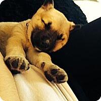 Adopt A Pet :: Cain - Saskatoon, SK