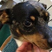 Adopt A Pet :: Bosco - Ooltewah, TN