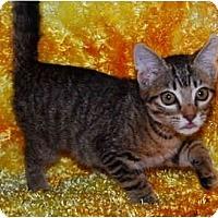 Adopt A Pet :: Malena - Colmar, PA