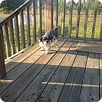 Adopt A Pet :: Chaz - Milton, FL