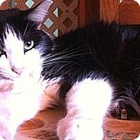 Adopt A Pet :: Jasmine - Jacksonville, FL