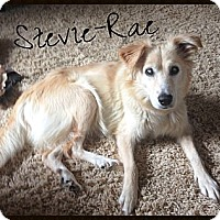 Adopt A Pet :: Stevie-Rae - Escondido, CA