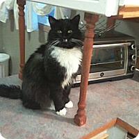 Adopt A Pet :: Asher - Edmonton, AB