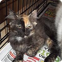 Adopt A Pet :: Zoe - Acme, PA