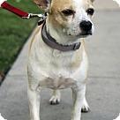 Adopt A Pet :: Patch