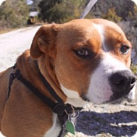 Adopt A Pet :: Hazel - Edisto Island, SC