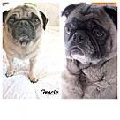 Adopt A Pet :: Frankie and Gracie