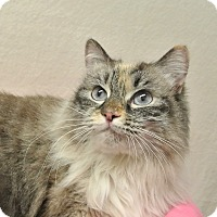 Adopt A Pet :: Luna - Foothill Ranch, CA
