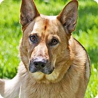 Adopt A Pet :: Jubal - Dripping Springs, TX