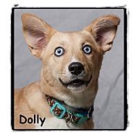 Adopt A Pet :: Dolly - Warren, PA