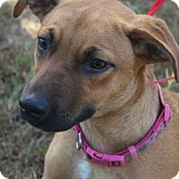 Adopt A Pet :: Fauna - Waldorf, MD