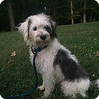 Adopt A Pet :: Mikey - Waldorf, MD