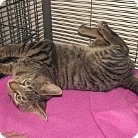 Adopt A Pet :: Milo - Plattekill, NY