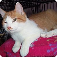Adopt A Pet :: BUTTERSCOTCH - Medford, WI