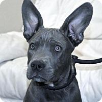 Adopt A Pet :: Nicholas - Ramona, CA
