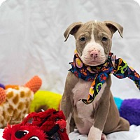 Adopt A Pet :: Tyche - Frisco, TX