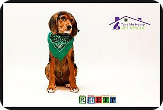 Border Terrier/Hound (Unknown Type) Mix Puppy for adoption in Richardson, Texas - Rhett