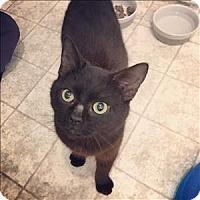 Adopt A Pet :: Jasper - Raleigh, NC