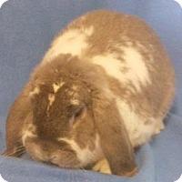 Adopt A Pet :: Flopper - Woburn, MA