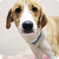Adopt A Pet :: Wyatt - Appleton, WI