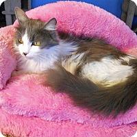 Adopt A Pet :: Emma - Glendale, AZ