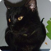 Adopt A Pet :: Buddy - Hamburg, NY