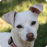 Adopt A Pet :: Jenna - Edmonton, AB