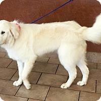 Adopt A Pet :: Wrigley - Oswego, IL