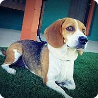 Adopt A Pet :: Retta's Run - Casa Grande, AZ