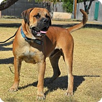 Adopt A Pet :: Bronx - Goodyear, AZ