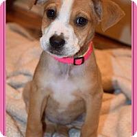 Adopt A Pet :: Doreen - Grafton, WI