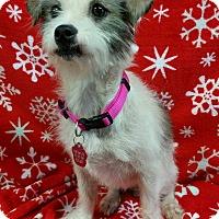 Adopt A Pet :: Olive Clark - Urbana, OH