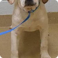 Adopt A Pet :: Sooner - Wooster, OH