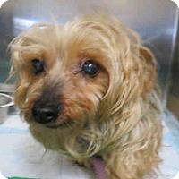 Adopt A Pet :: LONNA - Wainscott, NY