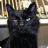 Adopt A Pet :: Isabella - Duluth, MN