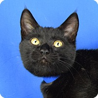Adopt A Pet :: Bastet - Carencro, LA