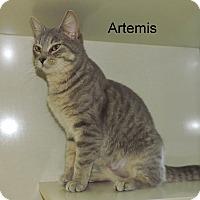 Adopt A Pet :: Artemis - Slidell, LA