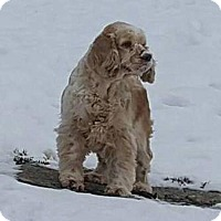 Adopt A Pet :: SUNI - ADOPTION PENDING - Smithfield, PA