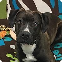 Adopt A Pet :: Maximilian - Grayslake, IL