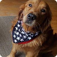 Adopt A Pet :: Dublin - Washington, DC