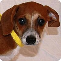 Adopt A Pet :: grechen - Gilbert, AZ
